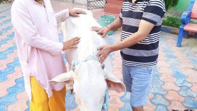 Photo of तुलसी गाय और गुरु पृथ्वी पर भगवान के रूप