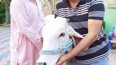 Photo of धन्यवाद है इस गौ प्रेमी देश को: पप्पन सिंह गहलोत