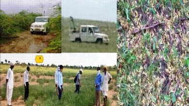 Photo of Locust control operations have been done in more than 5.66 lakh hectares area in 10 States till now